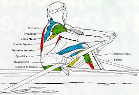 Rowing Machine Muscles Used - Drive Phase