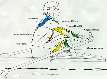 Rowing Machine Muscles Used - Recovery Phase